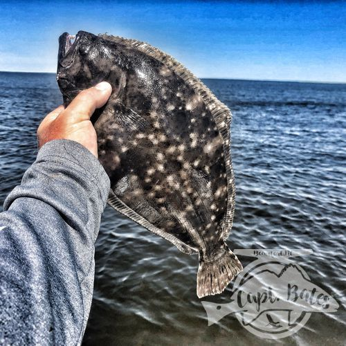 Flatfish flounder fun!