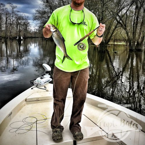 Brandon with his first ever fish on the fly, hickory shad can make for huge number days and their acrobatics will have everyone laughing