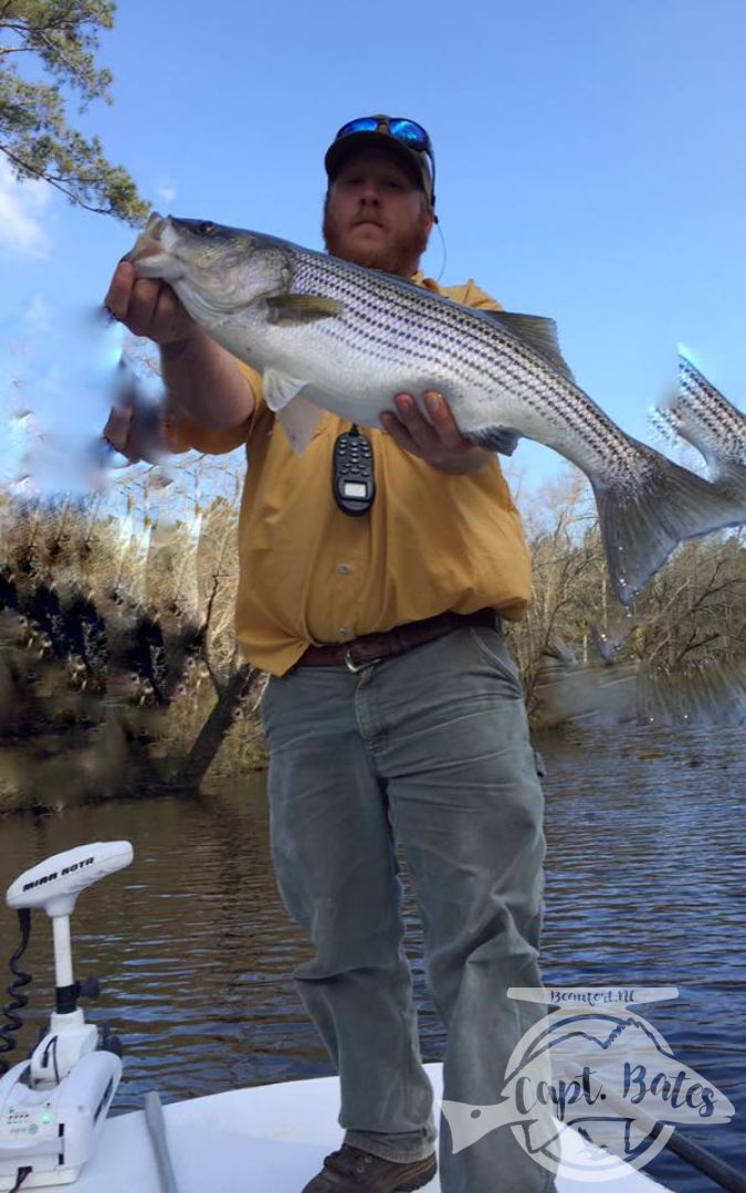 """30""""+ rockfish in the early spring!"""