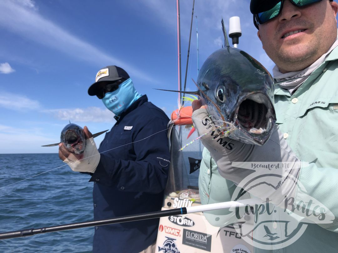 Nick and Greg got to see some of the best action we've had albie fishing around Cape Lookout all year!   Fish were on baitballs and eating well!   Nick caught his first albies ever! And Greg got his first ones ever on the fly rod!  I love seeing the excitement anglers show when they witness the mayhem this fish create when they are feeding good! This fishing never gets old to me and still get wound up seeing guys connect!