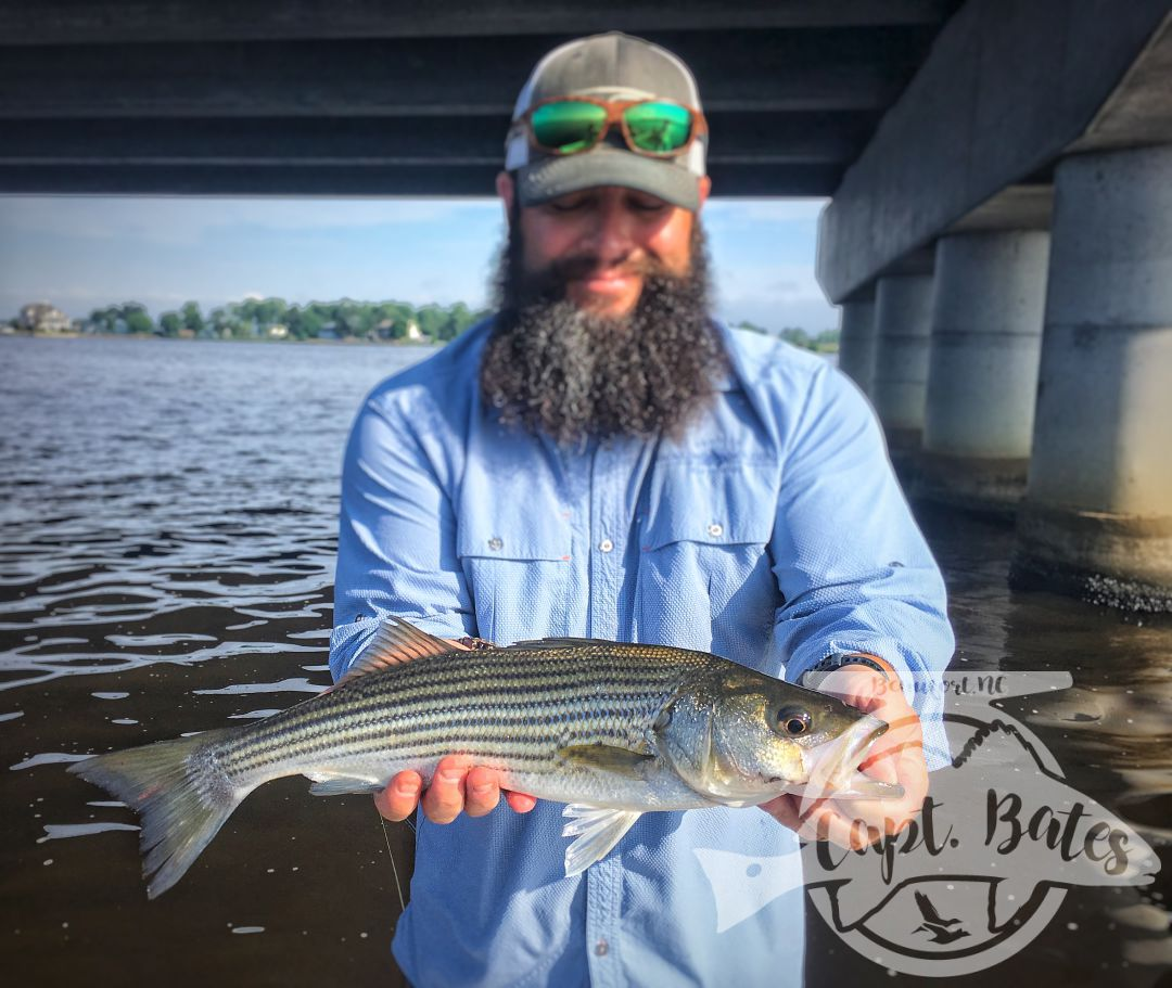 Summer time fun with the bearded wonder catching rockfish on topwater in New Bern North Carolina.