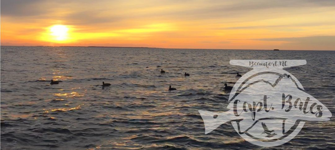 Open water sunrises, cool northerly winds, decoying sea ducks, and lots of laughs with friends, it's almost crunch time!  I got two days left open in November, and just a few in December. Up to 8 person trips no problem! Layouts, open water blind, and scissor rig hunting.  Captainbates.com