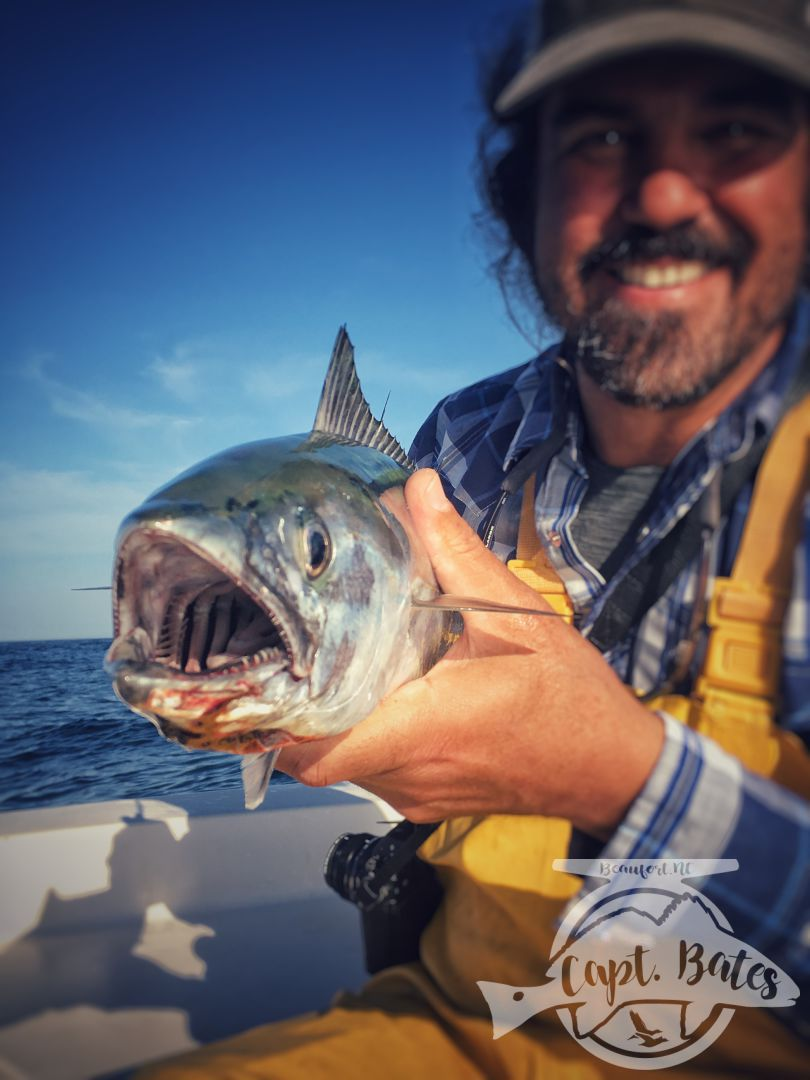 What sharp teeth you have Mr Bonito!