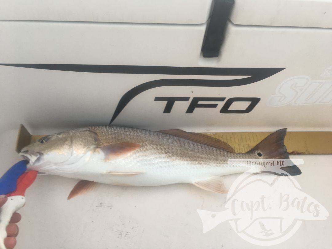 Summer time topwater redfish inshore!