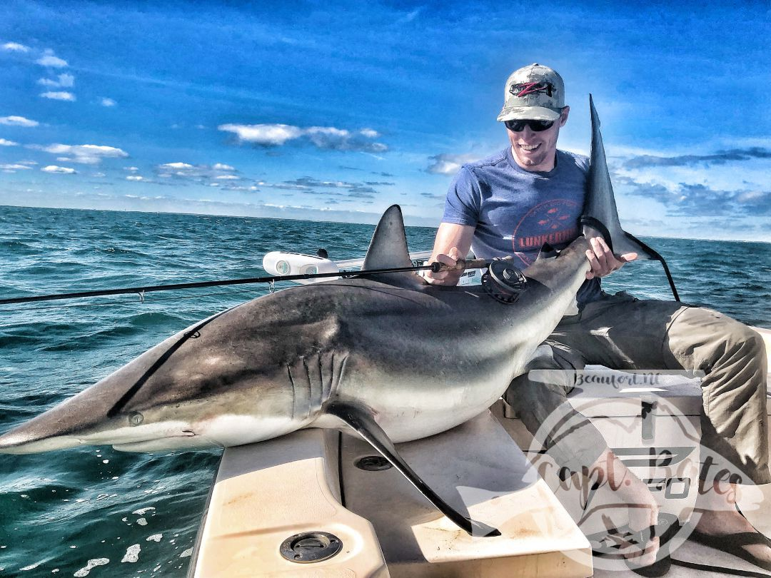 Owen sight casted to this huge 7' spinner shark on a TFO 10wt!!